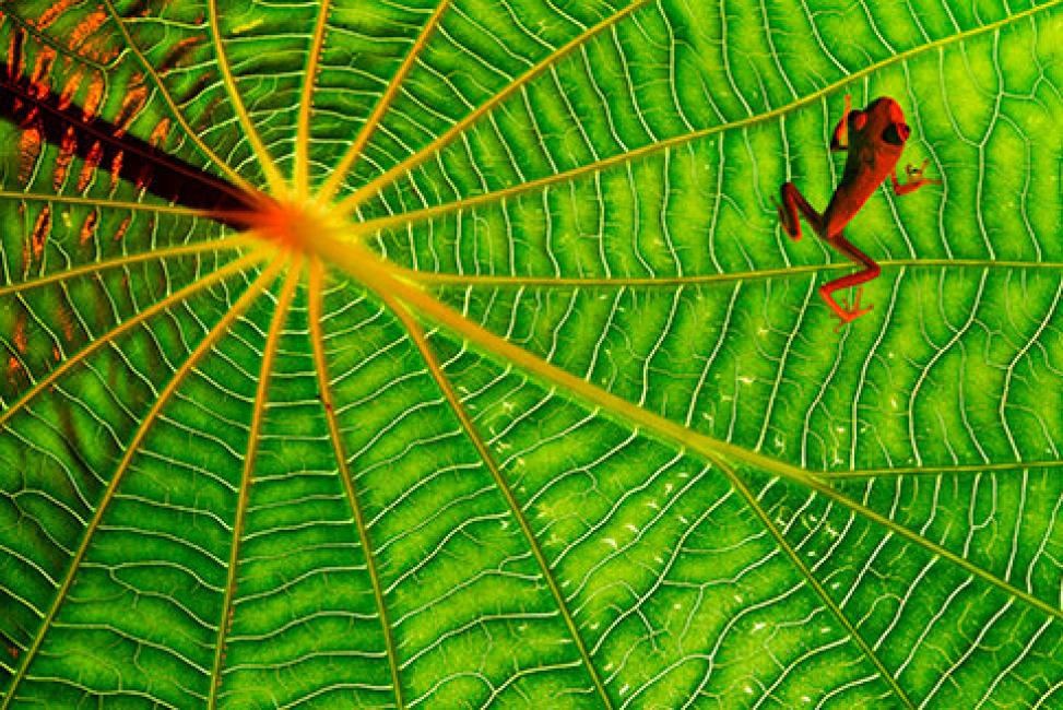 Fotografía de Salvador  Colvée Nebot para Nthephoto. Texturas tropicales