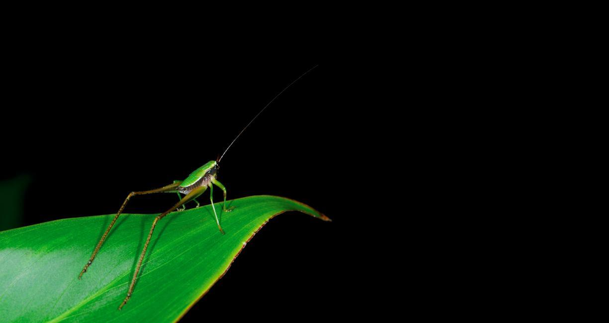 Fotografía de Tony Tirado para Nthephoto. Grillo