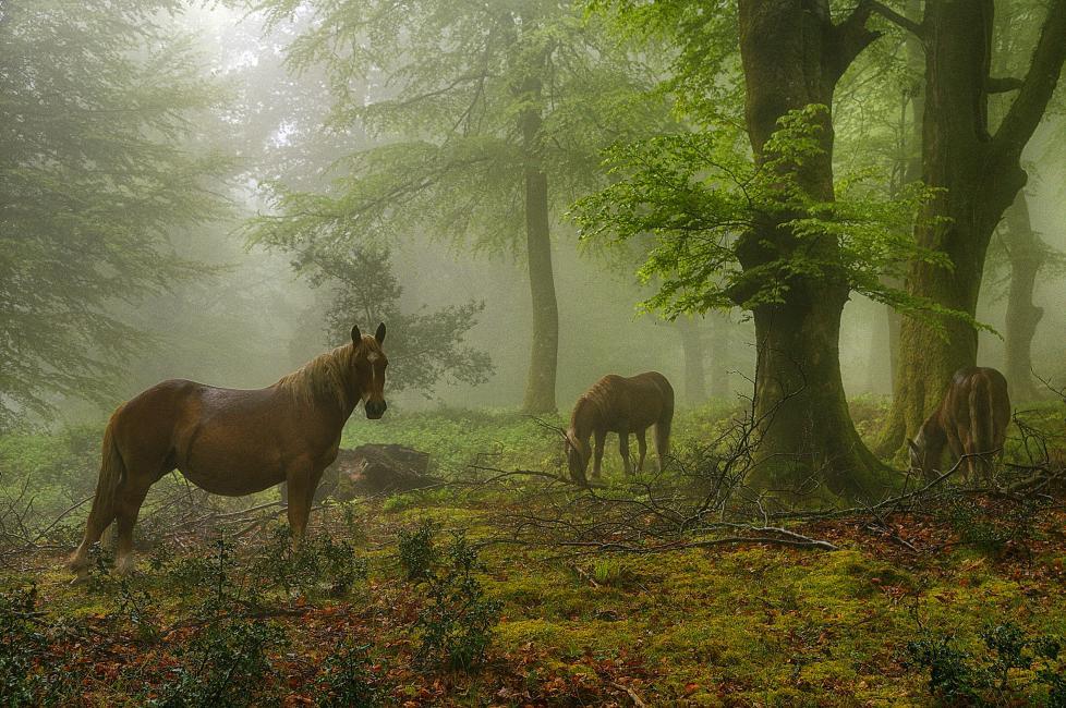 Fotografía de José Manuel Castrillo Pérez para Nthephoto. Fotografía realizada en  un bosque de hayedo en el Rasillo (Cantabria)