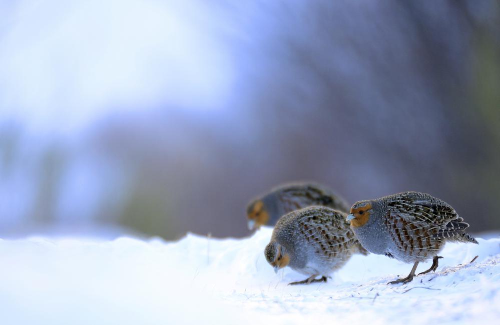 Fotografía de José Manuel Castrillo Pérez para Nthephoto. Fotografía realizada en la montaña de Riaño en el invierno de 2015