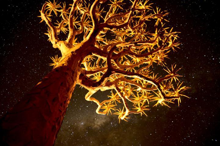 Fotografía de Enrique López-Tapia de Inés para Nthephoto. Un kokerboom, un árbol con hojas en forma de estrellas, fotografiado con la vía láctea de fondo. Namibia.