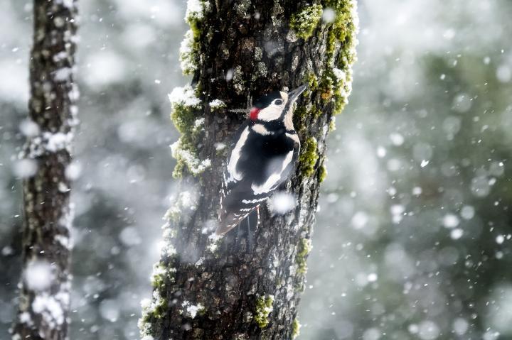 Fotografía de Jorge Ruiz del Olmo para Nthephoto. El buscavidas